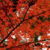 犬山寂光院(いぬやまじゃこういん)の紅葉