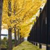 大野極楽寺公園の黄葉