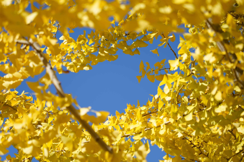 黄色いリース