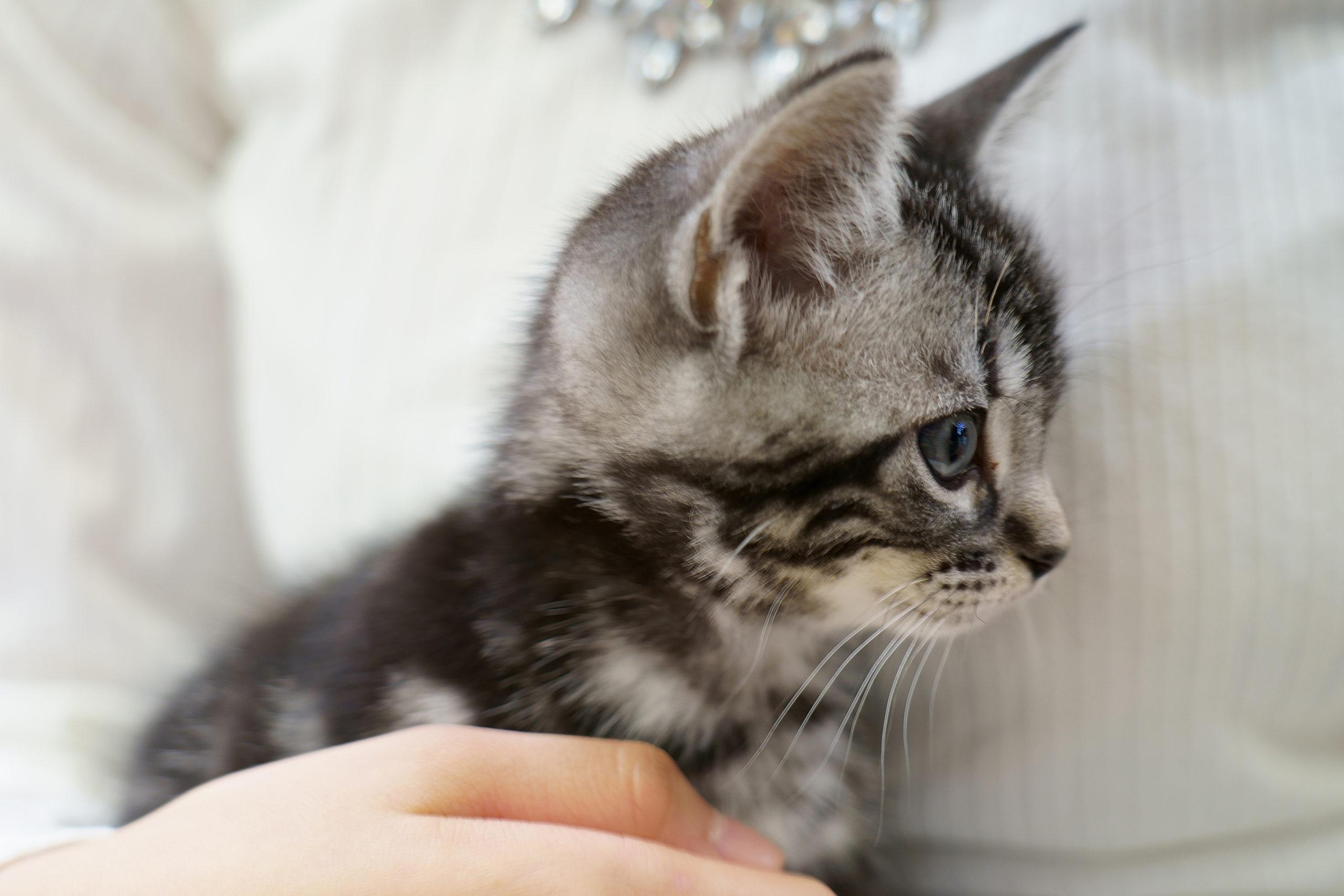 Aさん猫1