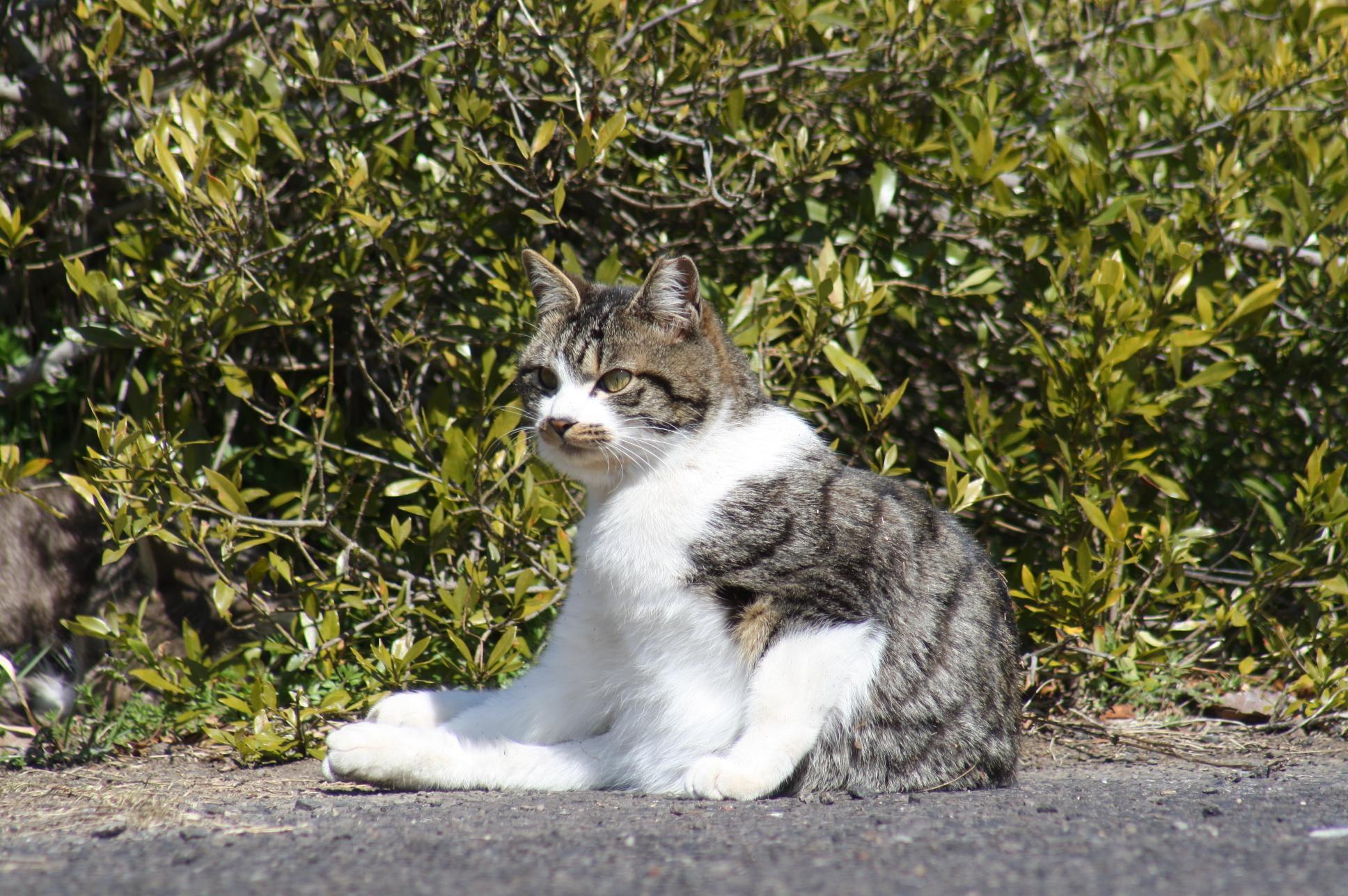 Yさん猫1