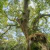 第九回写真対決(テーマ:木と緑)