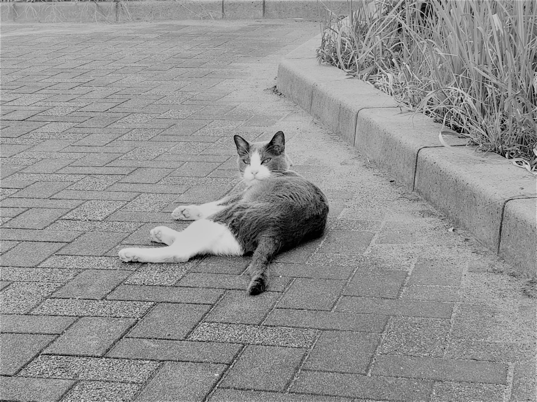 コンクリートに寝そべる猫
