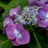 第二十六回写真対決(テーマ:季節の花)