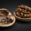 胡桃(くるみ)Walnutsの写真撮影
