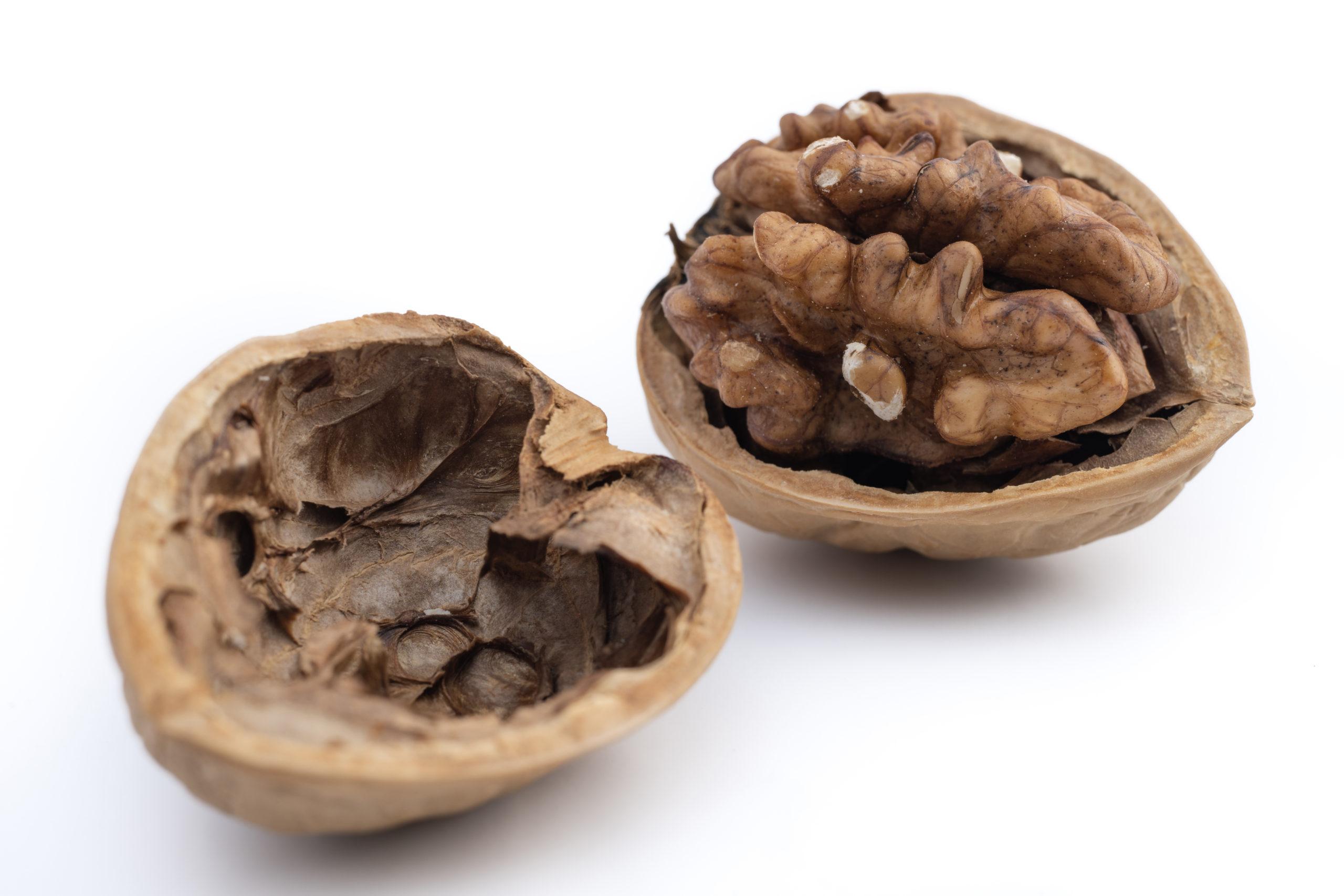 胡桃(Walnuts)の写真撮影白背景