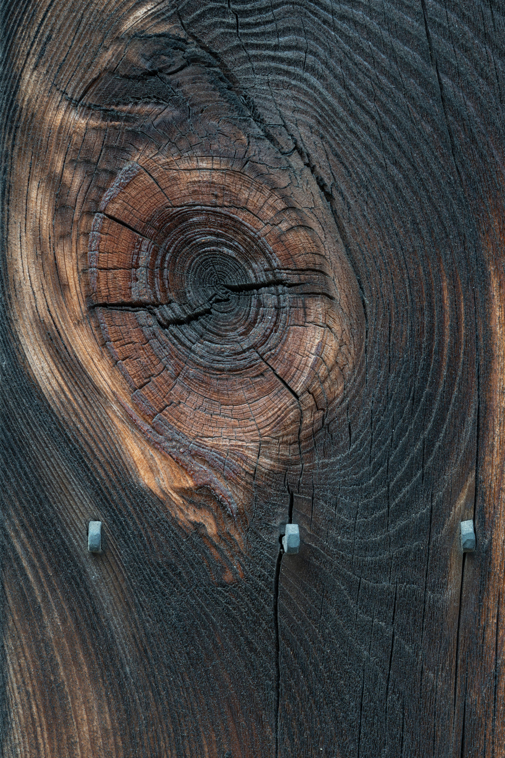 密度(ρ)ローと読める焼き杉板の節